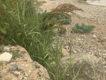 grønt i sand