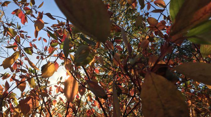 En lille smule mere efterårs-skrøbelig