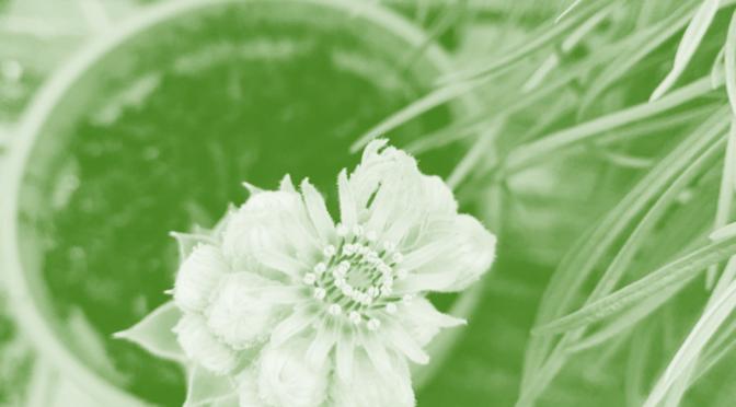Sommerpause-skærm, et studie i grønt
