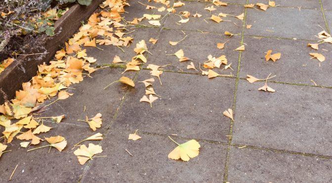 Velkommen efterår